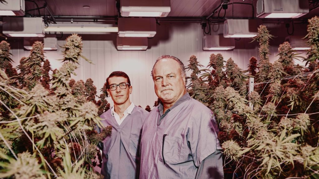 two persons surrounded by cannabis that may leads to Opioid Addiction